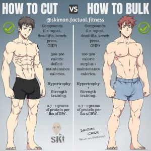 Bulking And Cutting